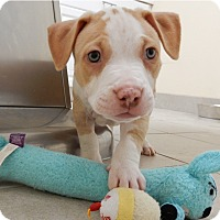 Adopt A Pet :: Phoenix - Long Beach, NY