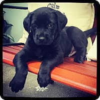 """Adopt A Pet :: Candy """"Cane"""" - Grand Bay, AL"""
