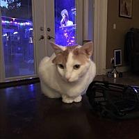 Adopt A Pet :: Latavia - Lauderhill, FL