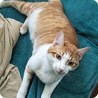 Adopt A Pet :: Leo - Tampa, FL