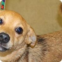 Adopt A Pet :: Ernie - Orland, CA