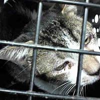 Adopt A Pet :: RUFUS - Conroe, TX