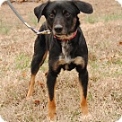Adopt A Pet :: Elliot