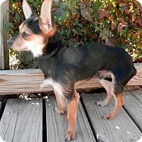 Adopt A Pet :: Marvin - Tyler, TX