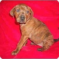 Adopt A Pet :: Chloe - Arlington, TX