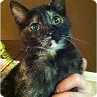 Adopt A Pet :: Sandy - Mobile, AL