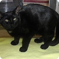 Adopt A Pet :: Windsor - Richmond, VA