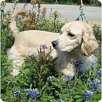 Adopt A Pet :: Merlot - Sugarland, TX