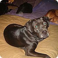 Adopt A Pet :: Ellie - North Jackson, OH