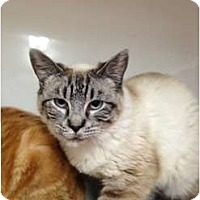 Adopt A Pet :: Passion - Wenatchee, WA