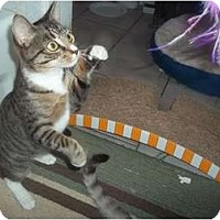 Adopt A Pet :: tabitha - Little Neck, NY