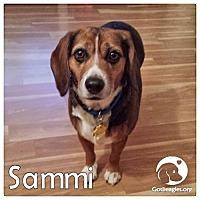 Adopt A Pet :: Sammi - Novi, MI