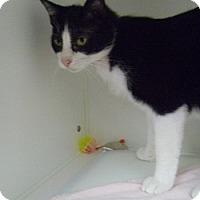 Adopt A Pet :: Liberty - Hamburg, NY