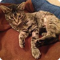 Adopt A Pet :: HunnyBun - Medford, NJ