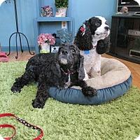 Adopt A Pet :: Sasha 10yr Adopted - Mentor, OH