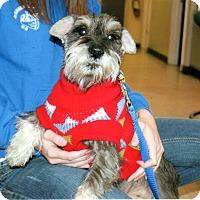 Adopt A Pet :: Mr. Mutz - Sharonville, OH