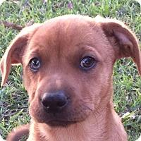 Adopt A Pet :: Bam Bam Adopted - Preston, CT