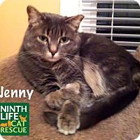 Domestic Shorthair Cat for adoption in Oakville, Ontario - Jenny