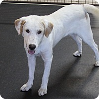 Adopt A Pet :: Mickey - Rockwall, TX