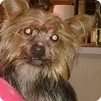 Adopt A Pet :: Maxx - Cary, NC