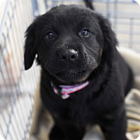 Adopt A Pet :: Chassis-Adopted! - Detroit, MI