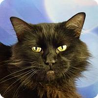 Adopt A Pet :: Ansley - Carencro, LA