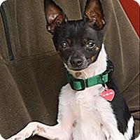 Adopt A Pet :: Sonny 204701 - Petaluma, CA