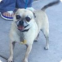 Adopt A Pet :: Mr. Booger - Las Vegas, NV