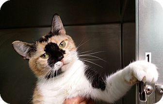 Calico Cat for adoption in Port Clinton, Ohio - Fiona