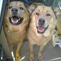 Adopt A Pet :: Teddy and Candy - Los Angeles, CA