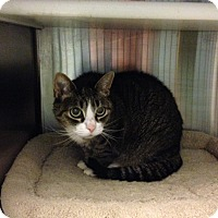 Adopt A Pet :: Willamina - Oyster Bay, NY