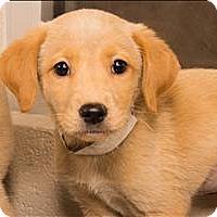 Adopt A Pet :: Blondie - Birmingham, AL