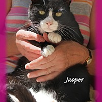 Adopt A Pet :: Jasper - Waterbury, CT