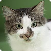 Adopt A Pet :: Petunia - Chicago, IL
