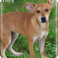 Adopt A Pet :: Duffy-STOP! READ ABOUT ME!!! - Marlborough, MA