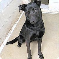 Adopt A Pet :: Gus - Sautee, GA