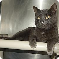 Adopt A Pet :: Cleo - Newport, NC