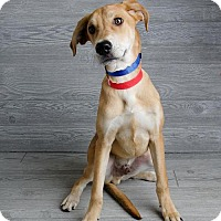 Adopt A Pet :: Comet - Denver, CO