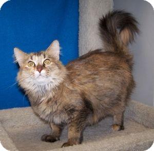 Lives Cat Rescue Colorado Springs