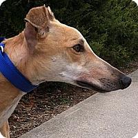 Adopt A Pet :: Pluto (GLS Pluto) - Florence, KY
