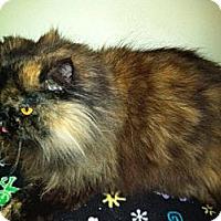 Adopt A Pet :: Lulu - Laguna Woods, CA