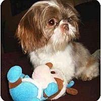 Adopt A Pet :: Jasmine - Mooy, AL