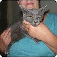 Adopt A Pet :: Mia - Los Alamitos, CA