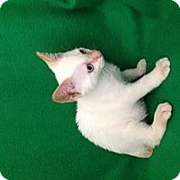 Adopt A Pet :: Kase - Simpsonville, SC