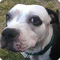Adopt A Pet :: Atlee - Southampton, PA