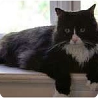 Adopt A Pet :: Prince Zander - Arlington, VA