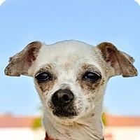 Adopt A Pet :: Jeanie - Gainesville, FL