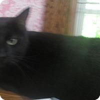 Adopt A Pet :: Tillie - Witter, AR