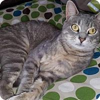 Adopt A Pet :: Grayson - Glastonbury, CT