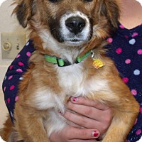 Adopt A Pet :: NELLY - Corona, CA